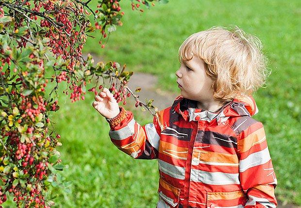 Obzvlášť červené bobulky děti lákají