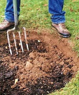 zasadit stromek není velká věda