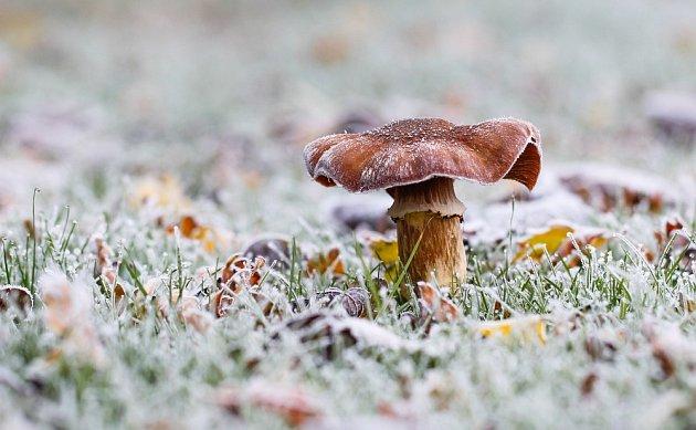 Zimní houbaření má své kouzlo
