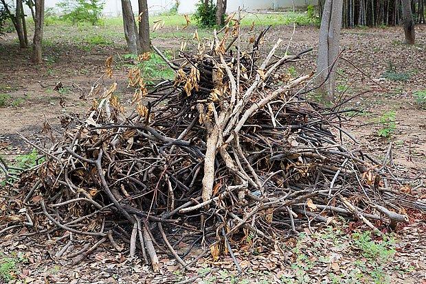 hromada dřeva poskytne zimní útočiště různým živočichům
