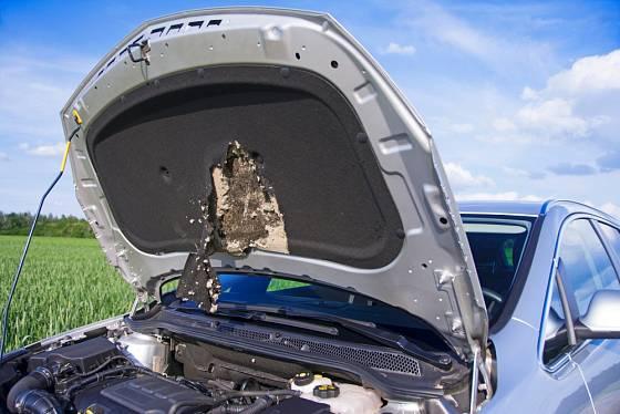 Hodně nepříjemností dokáží kuny způsobit majitelům aut.