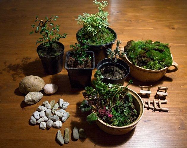 Vhodné rostliny do venkovní minizahrádky