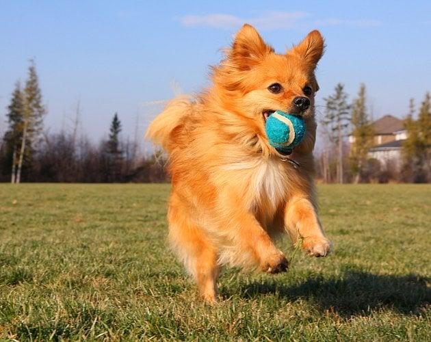 Psi vnímají barvy jinak než lidé.