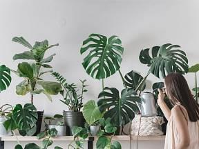 Správná zálivka pokojových rostlin je klíčová