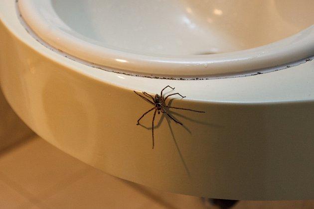 Pavouci potřebují ke svému životu vodu.