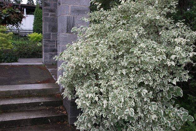 Panašovaný pustoryl u kamenného schodiště