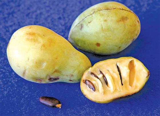 plody asiminy