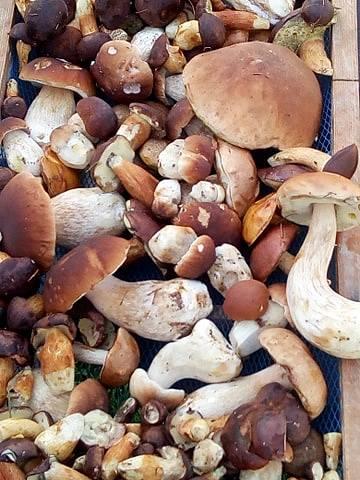 Krásná zdravé houby z Broumovska