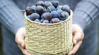 Švestky patří mezi nejzdravější ovoce