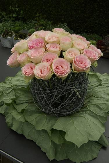 Něžné růže kontrastují s ostnatým drátem