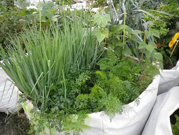 Prodyšný plastový pytel se pro pěstování bylinek hodí