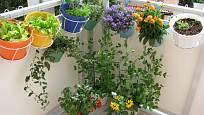 Balkónu sluší kombinace květin a bylin