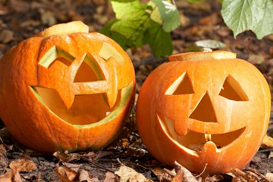 Vydlabané dýně na svátek Halloween.
