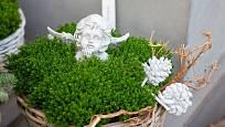 Stálezelené hebe můžete pěstovat v nádobách