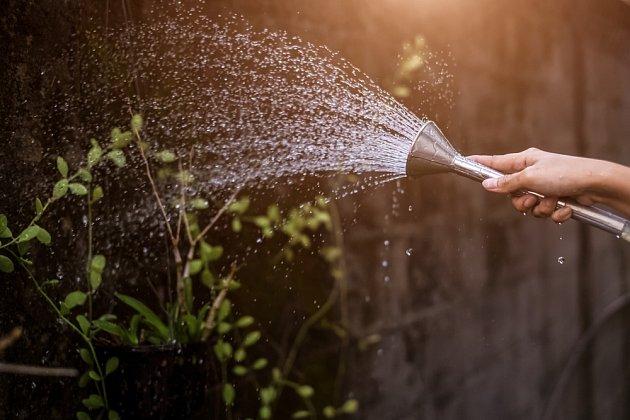 Ranní zalévání rostlinám svědčí