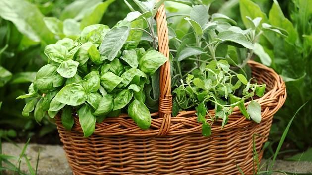 Jak správně zamrazit bylinky