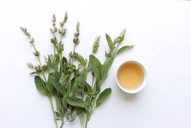 Šalvej je známá léčivka už z dob starých Římanů