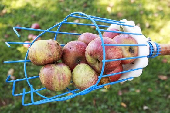 Drátěný česáček ovoce vystlaný molitanem.