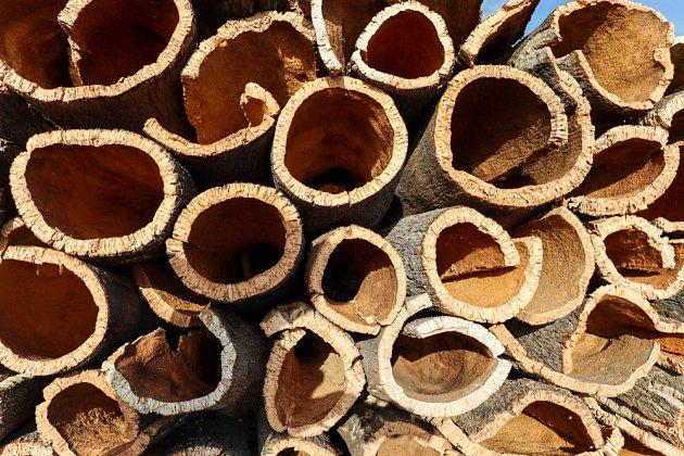 Sklizená korková dubová kůra z kmene korkového dubu (Quercus suber) pro průmyslovou výrobu zátek do lahví vína.