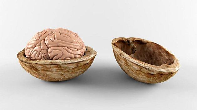 Jádra vlašských ořechů se podobají mozku. A jsou pro něj vynikající výživou