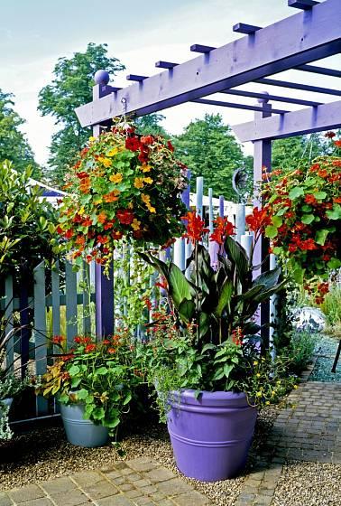 Dosna neboli Canna je ideální rostlinou pro letní terasy.