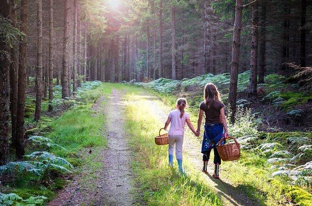 V lese lze sbírat houby i zážitky