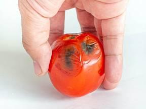 Jak ochránit rajčata před černými skvrnami.