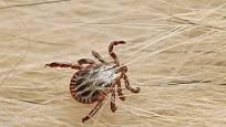 Existuje asi 650 druhů cizopasníků (ektoparazitů) známých běžně jako klíšťata.