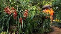 Orchideje nechybí ani v závěrečné, chlazené části skleníku Fata morgana.