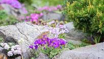 Skalničky je třeba chránit proti některým druhům hmyzu