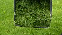 Posekaný porost uložíme do kompostu a prohodíme hlínou.