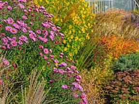 Zahrada i na podzim může hýřit pestrými barvami.
