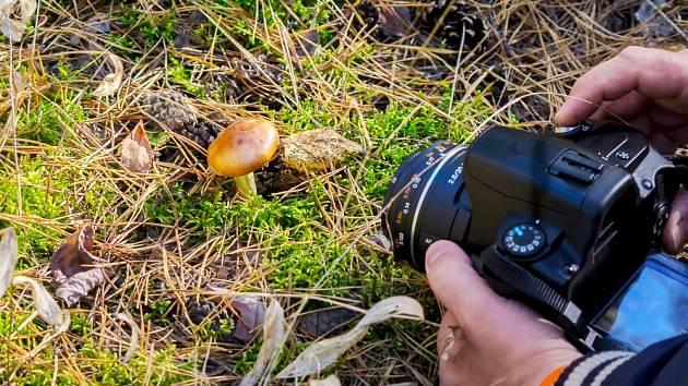 Focení hub - ilustrační snímek