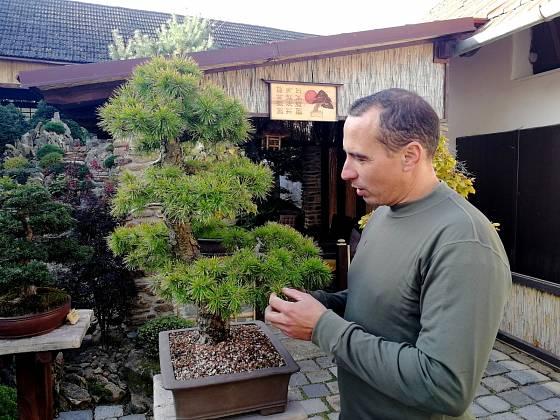 Petr Havelka a jeho bonsaje