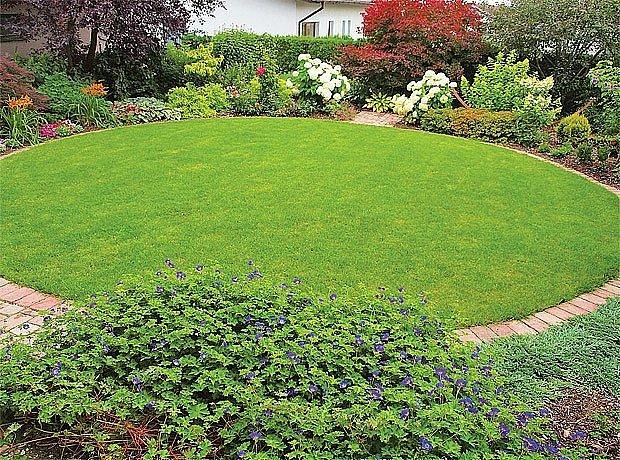 Od června na zahradě rozkvétá zajímavá odrůda kakostu – Geranium 'Rozanne'.