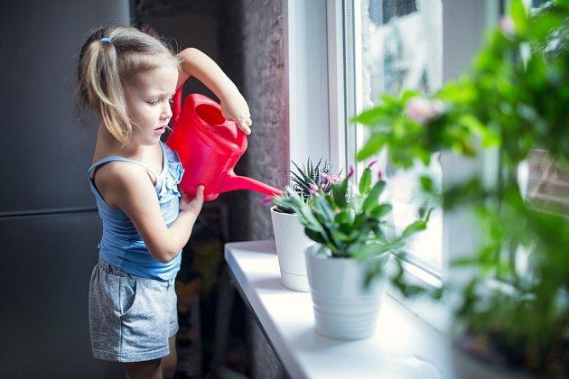 Kolik vody rostlina potřebuje? Záleží nejen na žíznivosti daného druhu, ale také na teplotě v místnosti a osvětlení