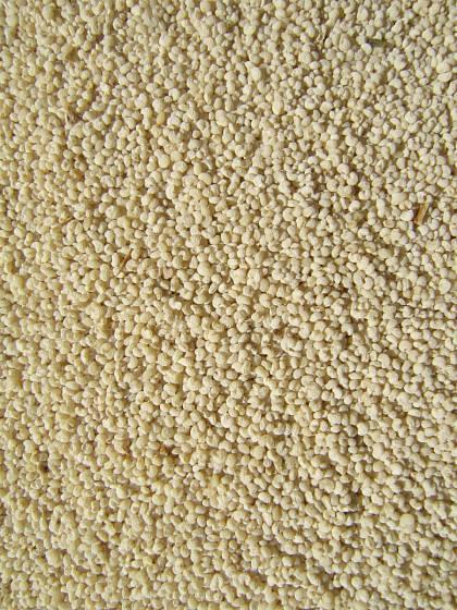 Semeno odrůdy Mák bílý z Biskoupky