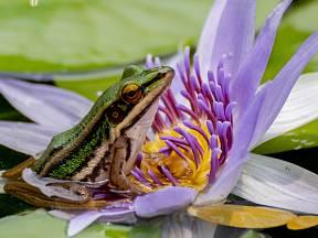 Vybudujte jezírko nebo rybníček, žáby se za odměnu postarají o škůdce.