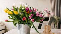 Tulipány se nabízejí v mnoha tvarech a barvách květů.