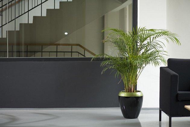 Barevné kombinace květináčů mohou perfektně ladit s pojetím interiéru.