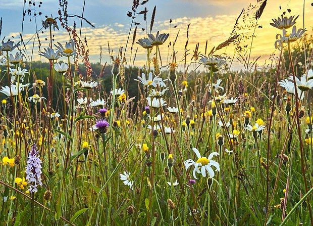 Tradiční hospodaření prospívá loukám plným květin