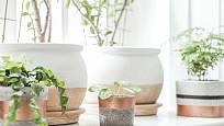 Parapet, rostliny a pěstební nádoby tvoří harmonický celek