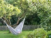 Ovocné stromy poskytují na zahradě víc, než jen ovoce