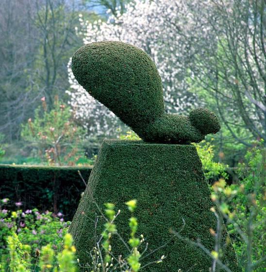 Tis dobře snáší řez a dokonce i tvarování do zelených soch