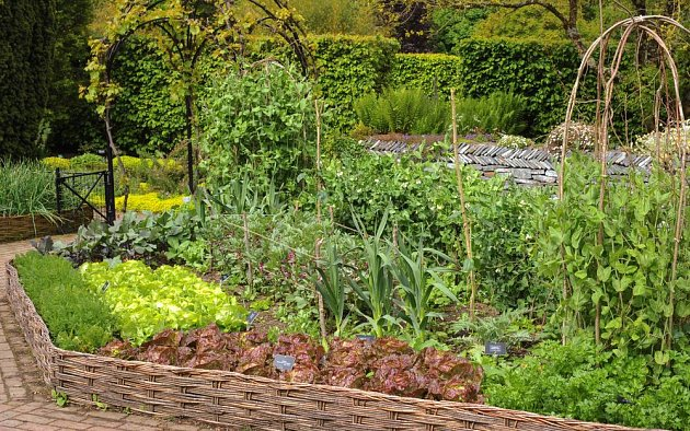 Zeleninová zahrada může být zajímavá i na pohled