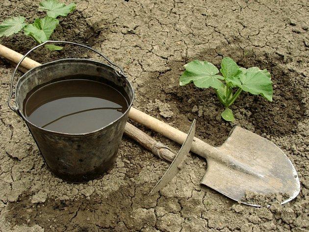 Teplomilné zeleniny vysazujeme do volné půdy až po tzv. zmrzlých, tedy přibližně v polovině května.