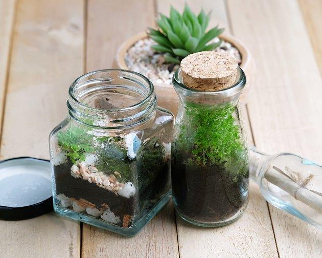 Takto sazené rostliny, postačí zalévat opravdu minimálně
