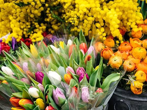 Je libo tulipán nebo plnokvětý pryskyřník?