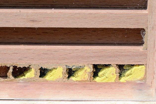 Náhled do hnízdních komůrek včelky samotářky
