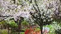 Jaro v Japonské zahradě.